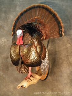 Turkey mount idea. Use drift wood.