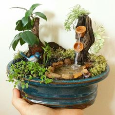 Pin on Fairy garden diy Pin on Fairy garden diy Indoor Fairy Gardens, Mini Fairy Garden, Fairy Garden Houses, Small Gardens, Miniature Plants, Miniature Fairy Gardens, Succulent Gardening, Succulents Garden, Dish Garden