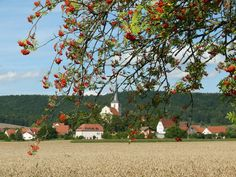 Demeterhof Dunninger, Bavaria, Germany. The farm produces organic grain and pigs using biodynamic methods. You can buy homemade whole grain bread, pork, eggs, vegetables and natural food in our farm shop http://www.organicholidays.co.uk/at/3397.htm