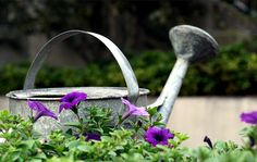 Watering Can and Petunias