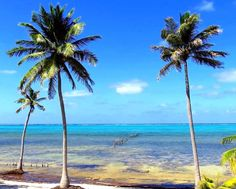 #Housesitter / #Petsitter needed for home on a #Caribbean island off the coast of the #Yucatan Peninsula, #Mexico