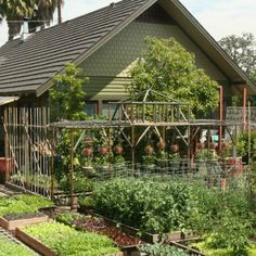 """California family grows up to lbs of produce each year in just their back yard—a space that's one-tenth of an acre. The Dervaes family, who call their mini-farm the """"Urban Homestead,"""" started it 30 years ago as a means to reconnect with their. Homestead Farm, Homestead Gardens, Farm Gardens, Family Garden, Home And Garden, Farm Business, Mini Farm, Urban Homesteading, Backyard Farming"""