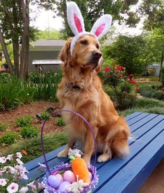 "PETS That Are READY for EASTER <=> They're getting in the holiday spirit—or are they? March 21, 2016 by: Charlotte Braun  <=> Proud Pup ""Yeah! This is what Easter is all about! Being handsome."""