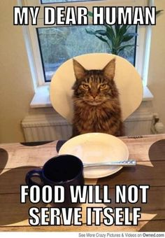 Cats are a**holes..... - CafeMom Mobile