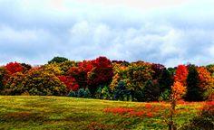 Romeo Michigan's autumn