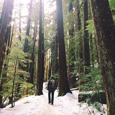 Snowy hike to Bagby Hot Springs in the Mt. Hood National Forest by @bethkellmer #traveloregon #Padgram