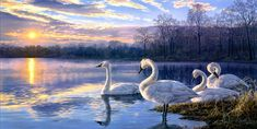 darrell bush art swans lake sunset landscape