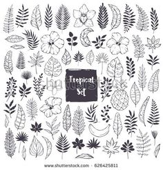 Hand drawn doodles and sketches of tropical leaves and flowers. Palm leaf, hibiscus. orchid, plumeria, banana leaf. Jungle trees.Botanical (floral). Vector mega set