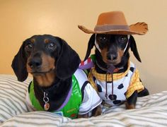 Funny Dachshund - dog cowboy Postcard - tap, personalize, buy right now! Dachshund Costume, Dachshund Funny, Dachshund Puppies, Dachshund Love, Funny Dogs, Cute Puppies, Cute Dogs, Daschund, Dog Halloween Costumes