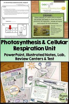 atp photosynthesis & cellular respiration webquest answer key