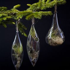 aerium ornaments from flora grubb