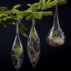 aerium ornaments from flora grubb