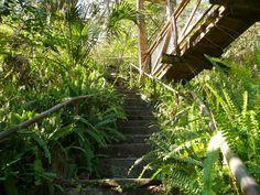Ravine Gardens State Park in Palatka, Florida.