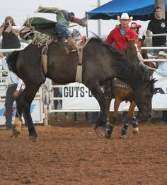pic credit: Nikki Lake Lawton, PRCA Rodeo, 2014