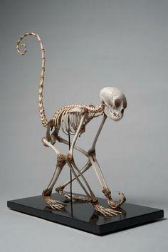 UZ-1041 | Skelet van een bosduivel