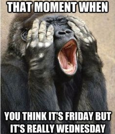 That moment when you think it's Friday but it's really Wednesday. #Wednesdayquotes #Wednesdaymemes #Funnywednesdaymemes #Funnymemes #Memes #Wednesdaymorningquotes #Funnywednesdayquotes #Wednesdaymorningmemes #Funnyquotes #Sarcasticquotes #Hilariousquotes #Humorousquotes #Laughablequotes #Wittyquotes #Dailyquotes #Everydayquotes #Instaquotes #Instastories #Quoteoftheday #Quotes #Quotesandsayings #therandomvibez
