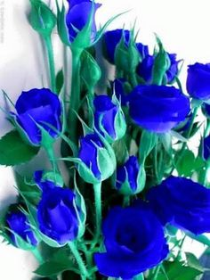 Learn how to clean artificial and fake silk flower arrangements to keep them looking good for longer. Fresh flowers are awesome and great to look at. Beautiful Rose Flowers, Rare Flowers, Exotic Flowers, Amazing Flowers, Love Rose, Blue Roses Wallpaper, Flower Phone Wallpaper, Silk Roses, Silk Flowers