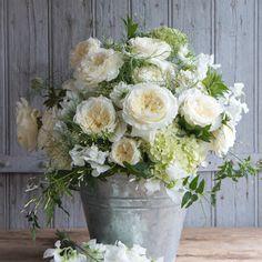 Home - David Austin Luxury Cut Roses Rose Wedding, Wedding Flowers, David Austin, White Gardens, Garden Roses, White Enamel, Georgian, Patience, Wedding Events