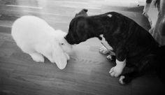 Animallove  Friendship