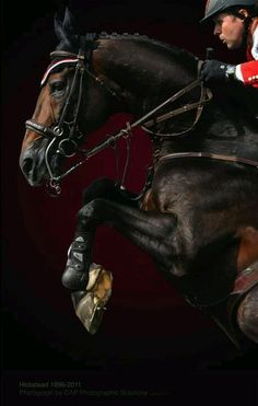 Hickstead was a British show jumping horse that competed in the Olympics. After he finished his Olympic career he kept jumping, in one show he completed his jumping round and then fell dead in the arena. Nobody quiet knows what happened to him.