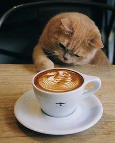 Coffee Latte Art, Coffee Logo, Coffee Is Life, Espresso Coffee, Coffee Photography, Animal Photography, Aeropress Coffee, Cafe Art, Coffee Pictures