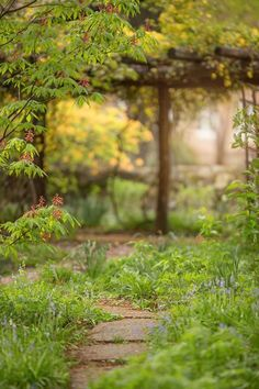 Fresh Green Nature Blurred Background Best Pic In 2019 Pinterest