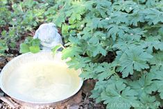 To stop mosquitoes and other insect larvae from breeding in birdbaths or rainwater barrels, put a few drops of vegetable oil on top of the water. It spreads to form a film over the surface of the water so the larvae cannot lay eggs, but won't bother the birds!