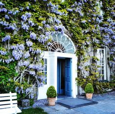 Gourmet Tours photo of Ballymaloe House and Wisteria in May