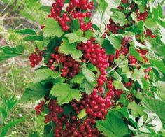 Estilo y hogar: Árboles frutales pequeños para terrazas o balcones