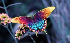 Butterfly an ART !! - The Art Feature
