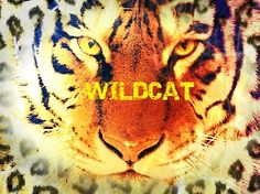 (1) Silent Heroes: Wildcat - Chapter 12: Road Trip - Page 1 - Wattpad