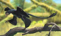 Los 15 mejores descubrimientos de 2014 sobre dinosaurios (IMÁGENES)