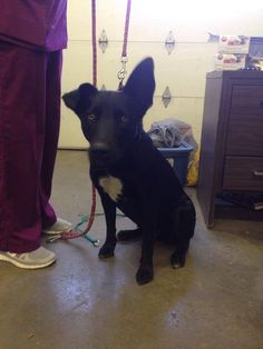 ONLY 14 FACEBOOK SHARES! Dede is about 1yr old, Sheperd mix, house trained!! Beautiful girl!! She needs foster/adopter ASAP!! We are FULL!! Black dog in a rural shelter!! The odds are stacked against her!  Florence Lauderdale Animal Shelter, AL https://www.facebook.com/photo.php?fbid=1425545417686022&set=a.1419106781663219.1073741830.1418130575094173&type=1&theater