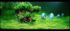 "Takashi Amano – ""Zen and the Art of the Aquascape"" 