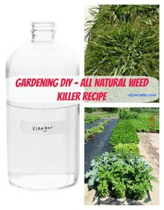 Gardening DIY - A Safe and All-Natural Way to Get Rid Of Garden Weeds