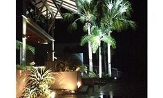 up lit palm trees Tree Uplighting, Led Fixtures, Palm Trees, Garden Design, Gardening, Landscape, Plants, Projects, Palm Plants