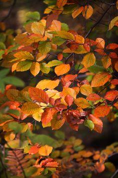 https://flic.kr/p/gC2iAu   autumn colours 2