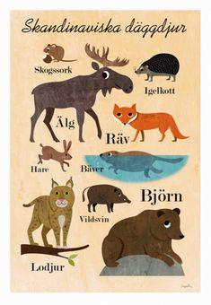 Ingela P Arrhenius - cute animals Scandinavian style