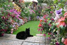 Shared by kitty! Find images and videos about summer, aesthetic and nature on We Heart It - the app to get lost in what you love. Beautiful Cats, Beautiful Gardens, Beautiful Moments, Beautiful Places, Private Garden, Bridal, Flower Power, Cats And Kittens, Kitty Cats