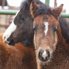Happy Ending for Foals from BLM Wild Horse Slaughter Roundup | Straight from the Horse's Heart