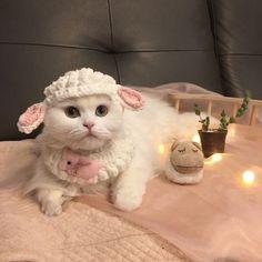 Kittens So Cute - Funny Cats I Love Cats, Crazy Cats, Cute Cats, Pretty Cats, Beautiful Cats, Cute Baby Animals, Funny Animals, Funny Cats, Cat Accessories