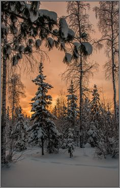 "from album ""Зима"" on Gorgeous Quiet winter evening (Russia) by Aleksej Tushin on fotki.yandexGorgeous Quiet winter evening (Russia) by Aleksej Tushin on fotki. Winter Szenen, Winter Love, Winter Magic, Winter Season, Winter Sunset, Winter Trees, Woods Photography, Winter Photography, Landscape Photography"