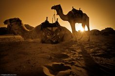 Sunset at Wadi Rum, Jordan. We rode our camels to watch the sun set at Wadi Rum & it was spectacular! We really love this photo we got. The sun was positioned just right between the legs of my camel while the other took a rest. Monuments, Wadi Rum Jordan, Camelus, Jordan Photos, Lawrence Of Arabia, Jordan Travel, Sleeping Under The Stars, Adventure Activities, Arabian Nights