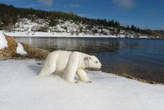 Schleich polar bear in Vale do Rossim (Portugal) Polar Bear, Portugal, Animals, Animales, Animaux, Animal, Polar Bears, Animais