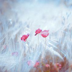 * by 2bek, via Flickr