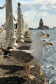 Maiden's Tower, Istanbul, Turkey – Rada – Join the world of pin Beautiful Birds, Beautiful Places, Places Around The World, Around The Worlds, Flora Und Fauna, Foto Poster, Turkey Photos, Pamukkale, All Nature