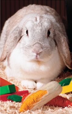 Toys For Rabbits, important to keep them active, stimulated, and challenged!  Some DIY from everyday household items!