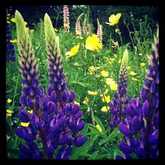 Flowers in Maine ~sms 06/13~