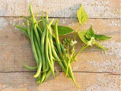Calima Beans | Baker Creek Heirloom Seed Co