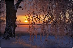 Frosty morning ... by Valtteri Mulkahainen, via 500px
